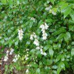 可愛らしい白い花