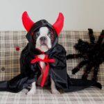 小悪魔のささやきを伝える犬