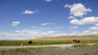 ゆっくり一歩ずつ前進する牛